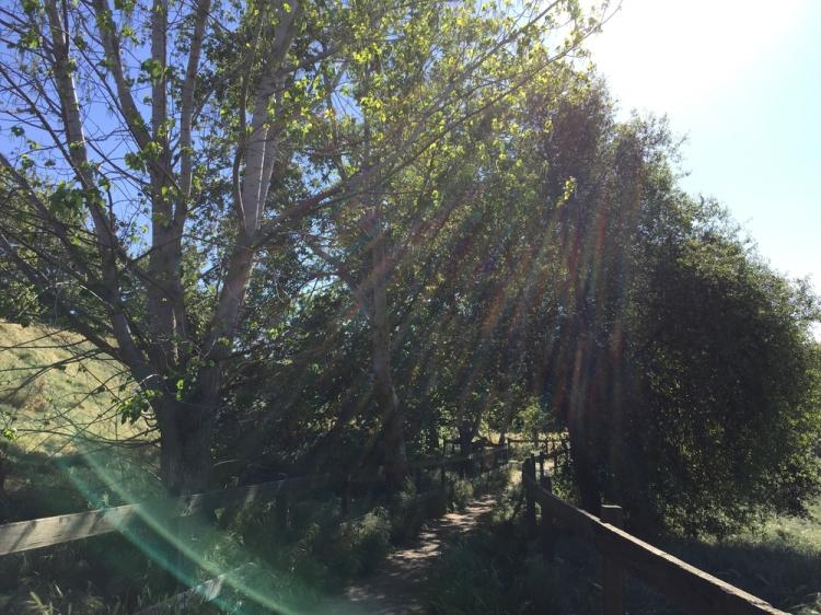 A path at Woodward Park.